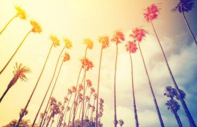 Retro stylizowane palmy o zachodzie słońca, Santa Monica, USA.