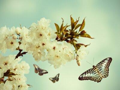 Obraz Retro stylizowany wizerunek motyli w sadzie