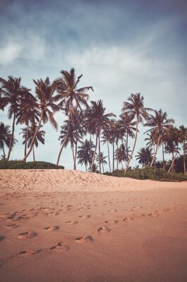 Retro toned picture of coconut palm trees by a beach.