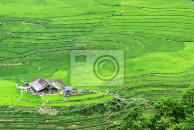 Rice Field szeregowy