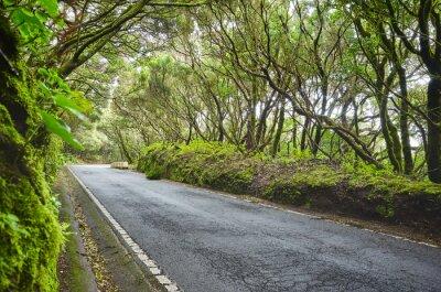 Road in Macizo de Anaga reserve, Tenerife, Spain.