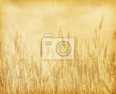 rocznika tekstury papieru. Pole pszenicy.