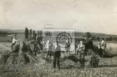Obraz Rolnik zbiorów stare zdjęcia