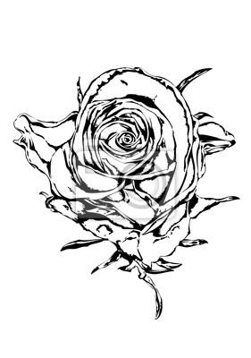 Rose kwiat rysunek sztuki ilustracji czarny