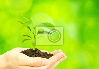 Obraz roślin w ręce