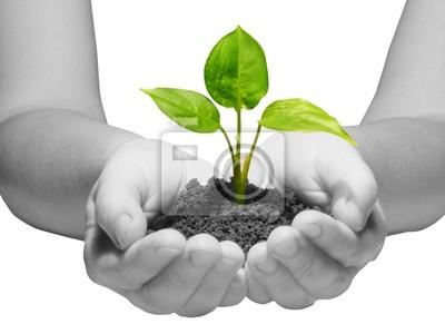 roślin w ręce