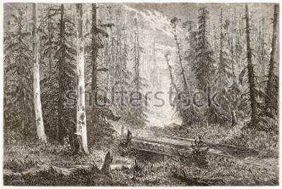 Obraz Rosyjska jedlinova lasova stara ilustracja. Stworzony przez Moyneta, opublikowany Le Tour du Monde, Paryż, 1867