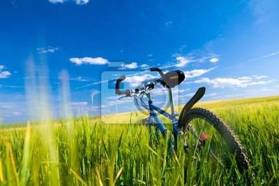 Rower na polu