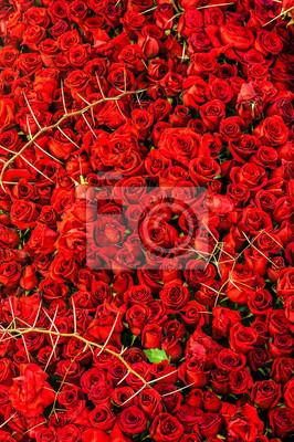 Róże i ciernie