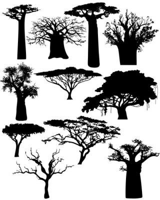 Obraz r ne afryka skie drzewa i krzewy wektor na wymiar - Malvorlage stammbaum ...