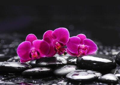 Obraz Różowa orchidea i kamienie