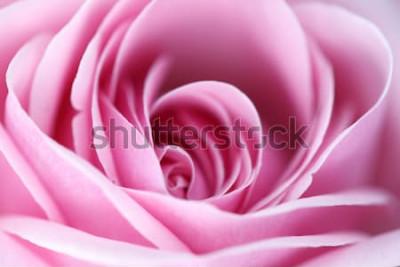 Obraz różowa róża makro z bliska