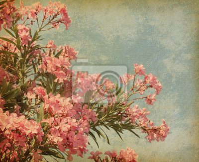różowe kwiaty oleander w stylu retro
