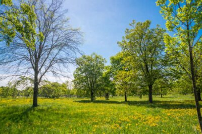 Obraz Russia, Saint Petersburg: view of the beautiful summer landscape in the Park