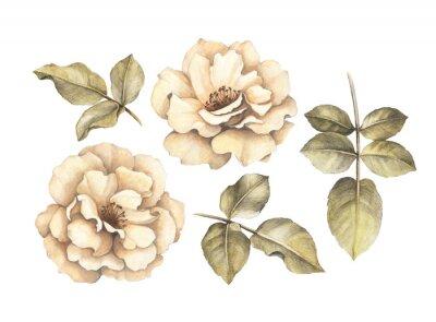 Obraz Rysunek ołówkiem róż