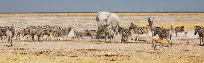 Obraz safari