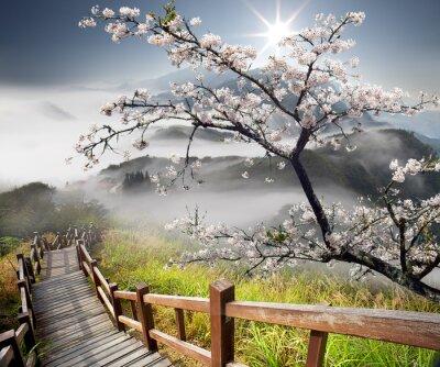 Obraz Sakura pocztówka adv celów innych lub użytkowania