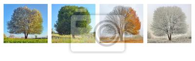 Obraz samodzielnie drzewa w czterech sezonu