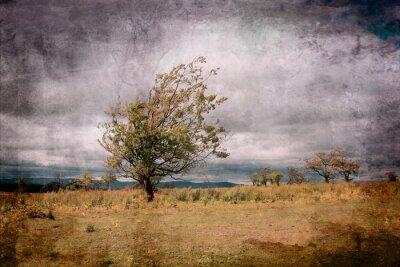 Obraz Samotne drzewo białe chmury agains