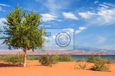 Samotne drzewo na th piaszczystej plaży w Sand Hollow State Park w Utah