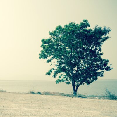 Obraz samotne drzewo w letni dzień background.Filtered obrazu: krzyż PROCES