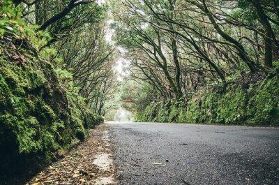 Scenic road in the Anaga UNESCO biosphere reserve, Tenerife, Spain.