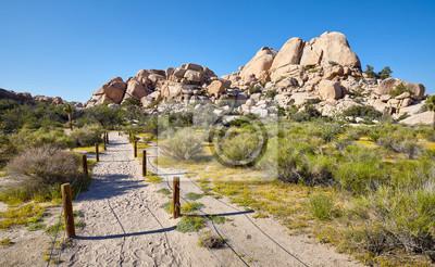 Scenic trail path in the Joshua Tree National Park, California, USA.