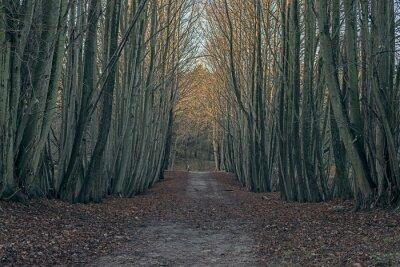 Obraz Ścieżka Brud w zimowym lesie.