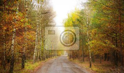 Ścieżka przez las jesienią.