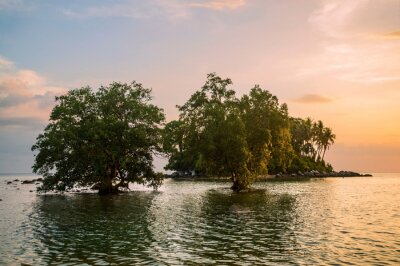 sea at beautiful sunset with trees in water