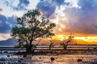 Sea sunset or sunrise with tree and colorful of sky and cloud in twilight
