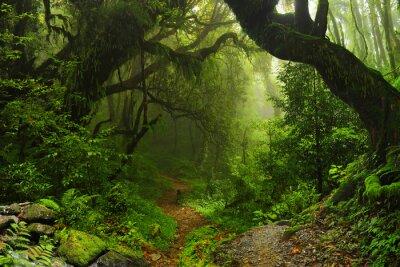 Obraz Selva Nepalu