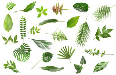 Obraz Set of different green leaves on white background