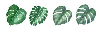 Obraz Set of differents magnolia leaves on white background. Watercolor, line art, outline illustration.
