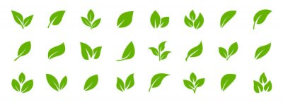 Obraz Set of green leaf icons. Leaves of trees and plants. Leaves icon. Collection green leaf. Elements design for natural, eco, bio, vegan labels. Vector illustration.