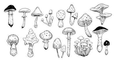 Obraz Set of mushrooms. Outline with transparent background. Vector sketch illustration