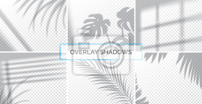 Obraz Set of shadows, overlay effects mock up, window frame and leaf of plants, natural light, vector illustration.