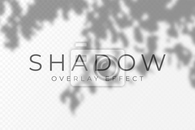 Obraz Shadow overlay effect. Transparent soft light and shadows from plant branches, leaves and foliage. Mockup of transparent shadow overlay effect and natural lightning