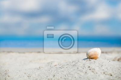 Shell na piaszczystej plaży