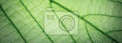 Obraz Sieć sztandar zieleń opuszcza makro- tekstury tło