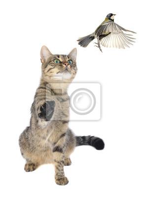 Obraz Sikorki i kotów