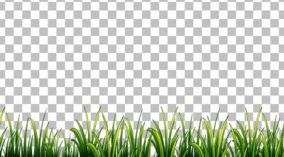 Obraz Simple grass field on transparent background