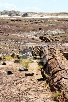 Skamieniały las Desert Landscape Park Narodowy