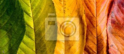 Obraz Skład jesień, kolorowe liście z rzędu. Studio strzałów.