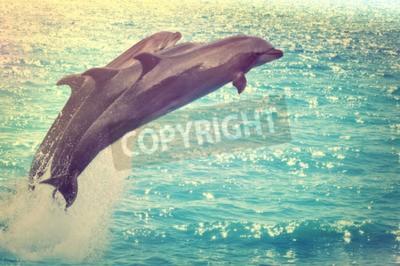 Obraz skoki delfinów