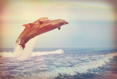 Obraz Skoki delfinów, Instagram