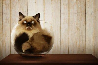 Obraz Słodkie kot perski wewnątrz szklanej misce