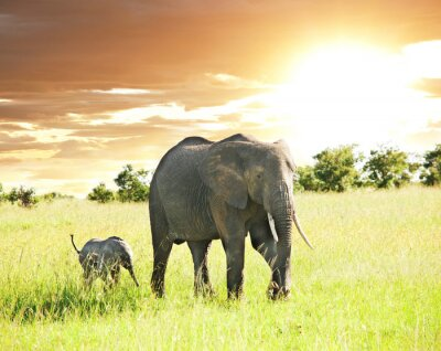 Obraz słoń
