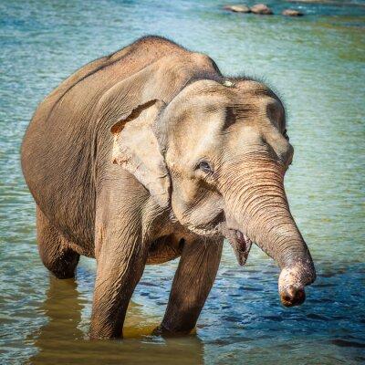 Obraz Słoń kuba kąpieliskach