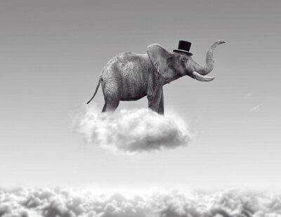 Obraz Słoń latania w chmurach